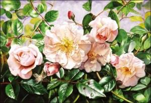 old-rambling-rose
